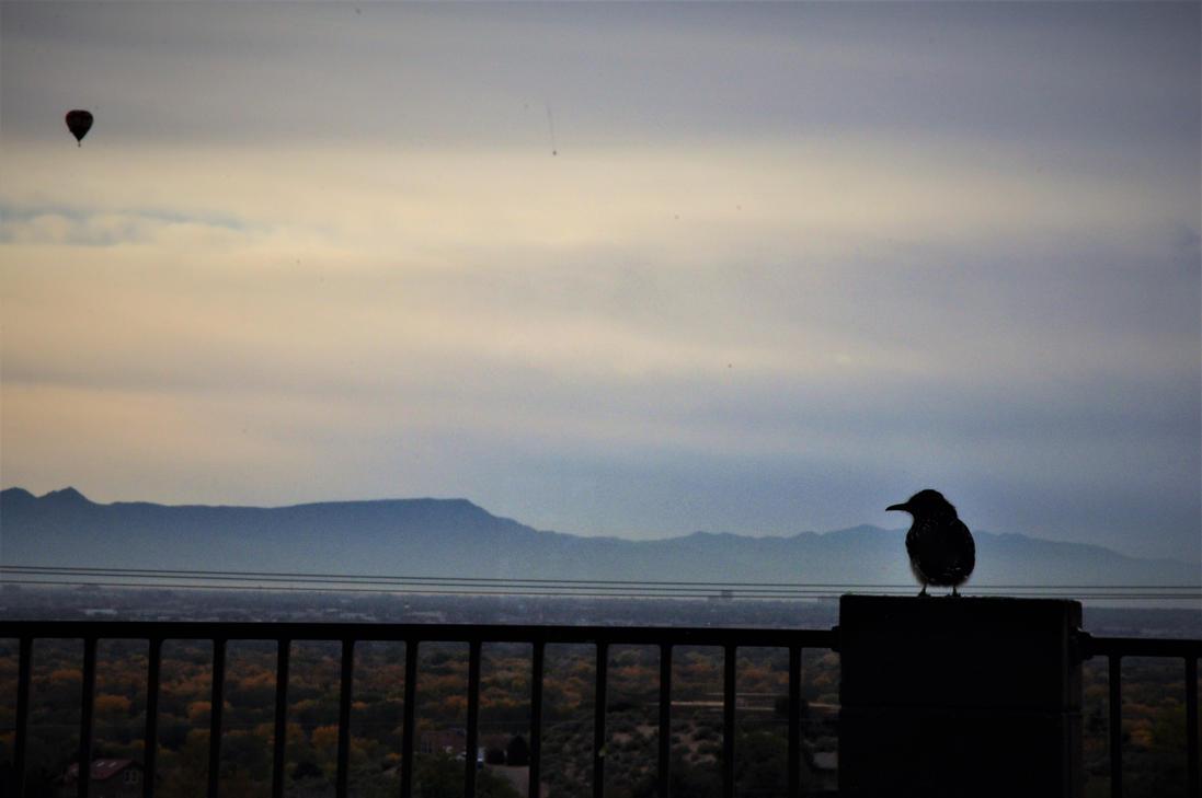 bird song by Michaeldavitt