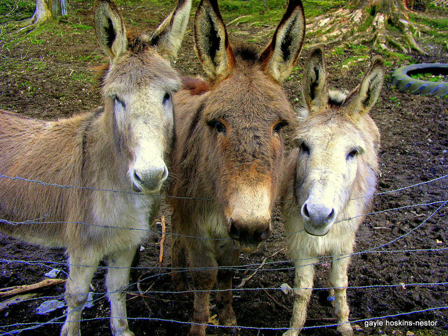 We Are The Three Amigo's by Intergrativeone