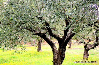 I Love Olives by Intergrativeone