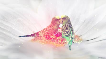 Kissing Budgies
