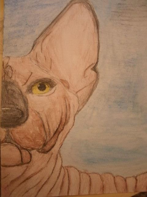 Sphynx by Ashwolf13