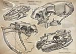 Sketchbook - Reptile Skulls I
