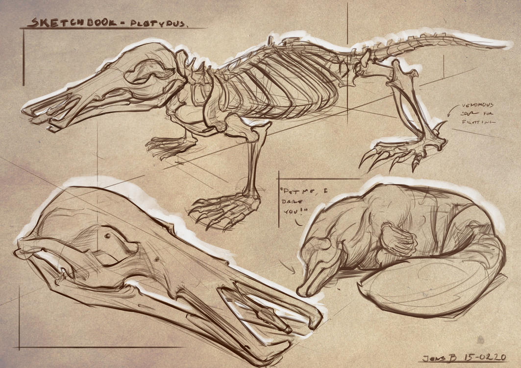 Study Platypus by Rubisko