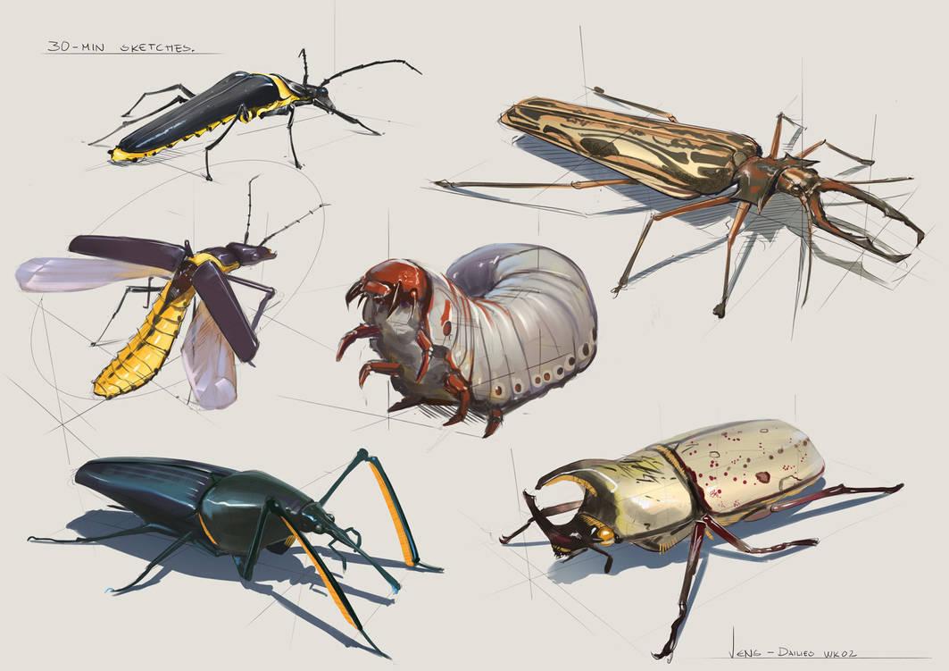 30 Minute Sketches - Week 2 Beetles by CaconymDesign