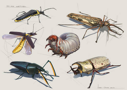 30 Minute Sketches - Week 2 Beetles