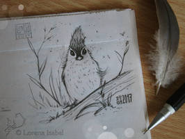 # 13 - Tufted Titmouse- by Loisa