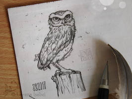 # 20 - Burrowing Owl - by Loisa