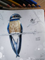 # 69 - Whiskered Treeswift - by Loisa