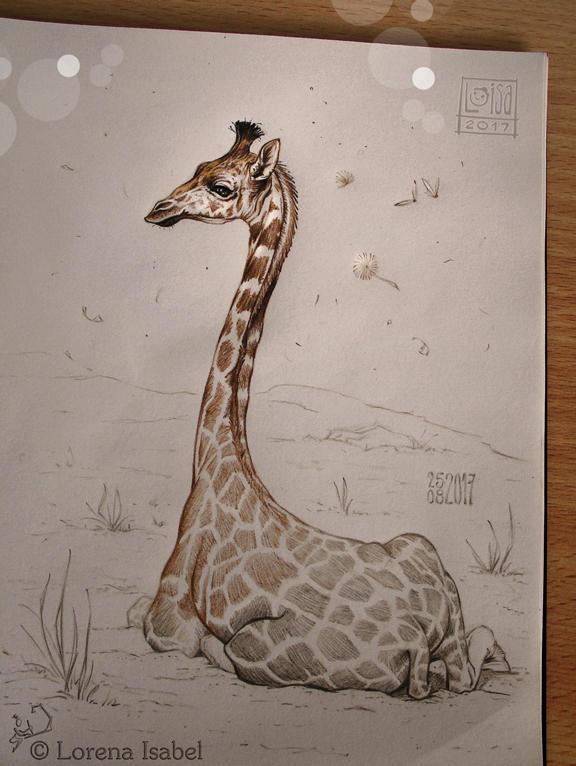 Day 26 - Giraffe -