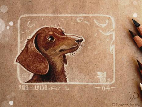 04 - Dachshund dog