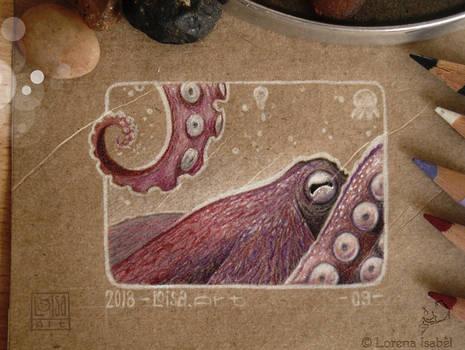 09 - Octopus