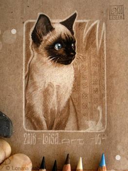 16 - Cat