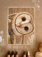 25 -  Barn Owl