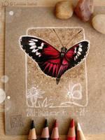 26 - Butterfly by Loisa