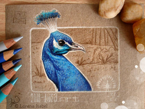 30 - Peacock