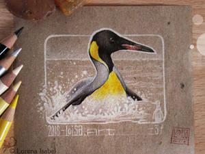 37 - King Penguin -
