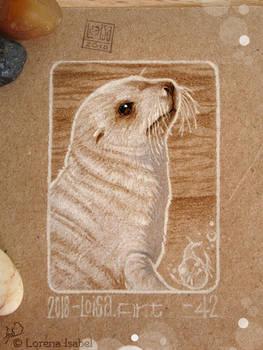 42 - Antartic Fur Seal