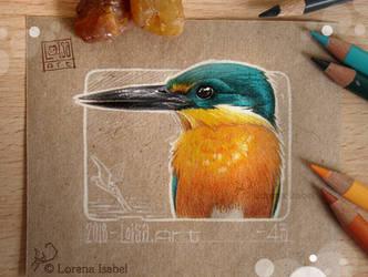 43 - American Pygmy Kingfisher by Loisa