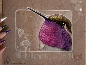 49 - Hummingbird