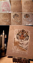 50 - Siberian Tiger (step by step)