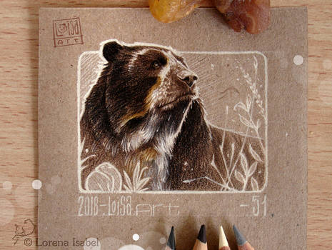 51 - Spectacled Bear -