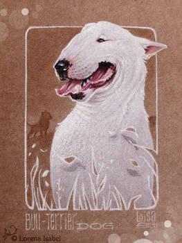 Bull Terrier -dog-