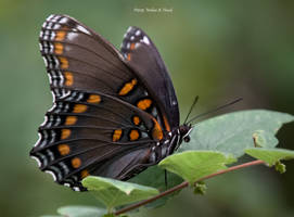 Just a Butterfly by abstractcamera