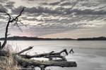 Maffitt Reservoir with dead tree
