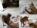 Cats with Bubbles