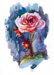 Watercolour pink rose