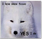 Love Snow Fox Stamp