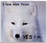 Love Snow Fox Stamp by Dragon-Stigmata
