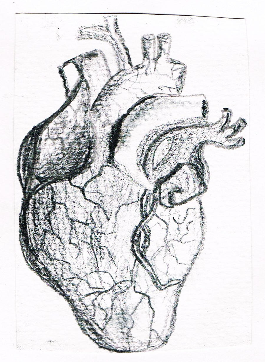 heart anatomy sketch Gallery
