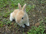Belle, my rabbit
