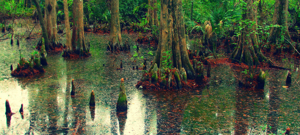 Swamp by SnapColorCreations