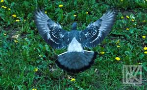 Angel Bird . . . ? by kaioian