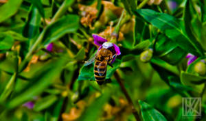 Honey Bee . . . ? by kaioian