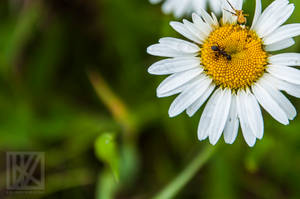 Abyss Flower . . . ? by kaioian