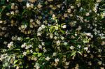 Flower Forest . . . ?