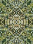 Kaleidoscope-fallen leaves