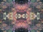 Kaleidoscope-Autumn colors