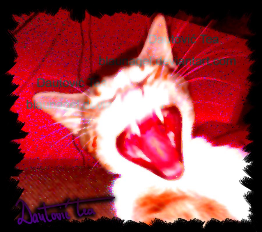 Aren't cats evil by blaunagel