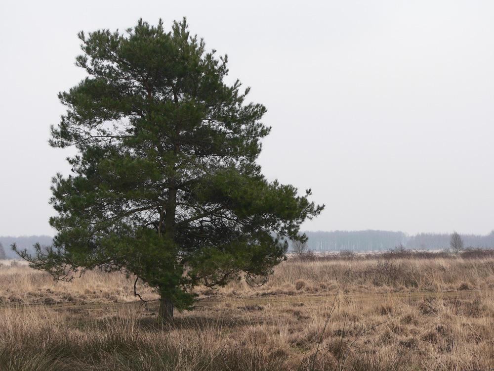Africa Tree by GorgoNL