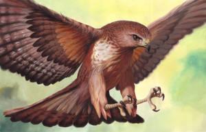 bird by designer356