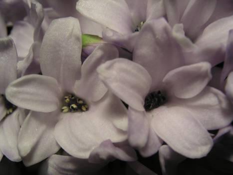 Flower White - 002