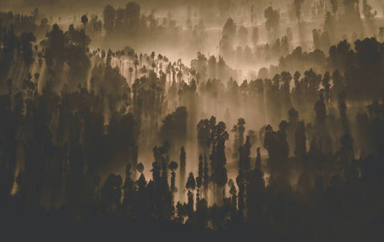 Silhouette-photography-of-forest-795693