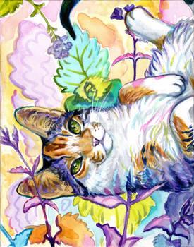 Catnip Dreams
