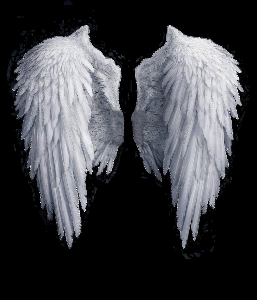Alzando el vuelo Angel_wings_stock_png_by_shadow_of_nemo-d7j2t68