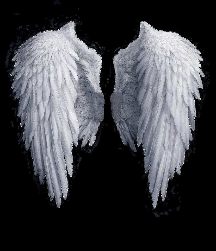 Victorias Secret Angel Wings Wallpaper Angel wings stock PNG ...