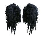 black angel wings stock PNG